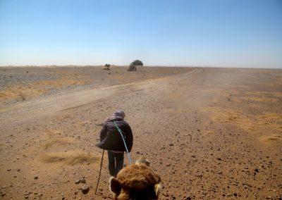 trek-desert-maroc-randonnee-desert-maroc-guide-abdou-vallee-des-roses-mont-mgoun-36