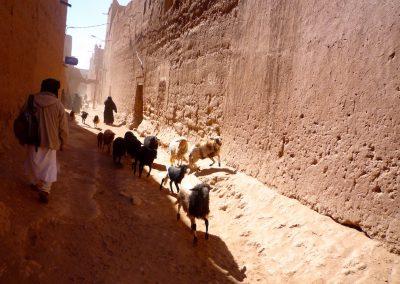 trek-desert-maroc-randonnee-desert-maroc-guide-abdou-vallee-des-roses-mont-mgoun-47