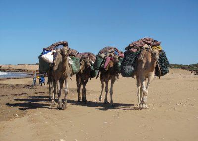 trek-essaouira-randonnee-essaouira-guide-marocain-032