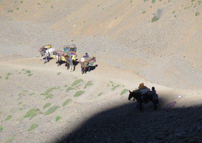 trek-montagne-mont-mgoun-randonnee-trek-guide-mont-mgoung-maroc-039