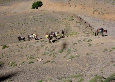 trek-montagne-mont-mgoun-randonnee-trek-guide-mont-mgoung-maroc-052